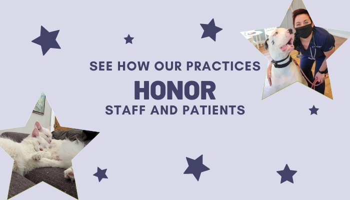 Honoring Our Practice Teams & Their Patients