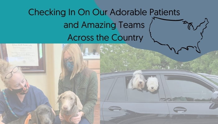 Adorable Patients Supported by Amazing Teams