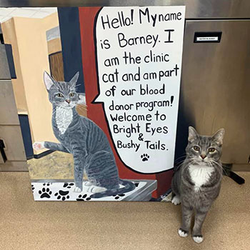 A canvas created by Bright Eyes and Bushy Tails' veterinary assistant, Belou