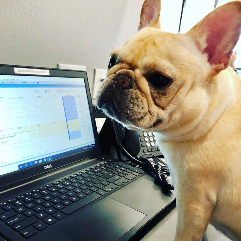 Spring TX Cute Concierge Appointment - French Bull Dog