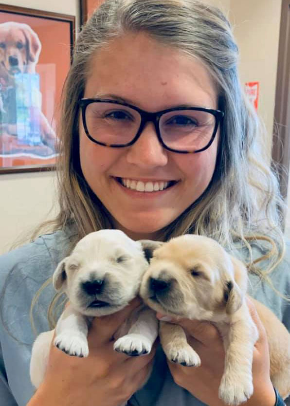 Shelby, NC Veterinary with Golden Retrieve Puppies