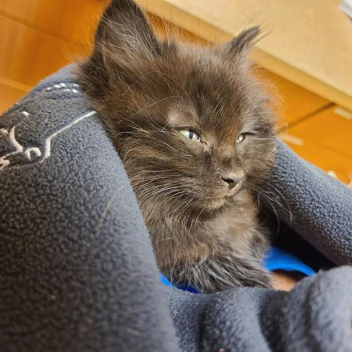 New Palestine Indiana Veterinary Practice: Kitten's first visit