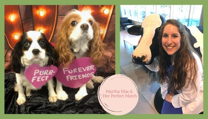 How a Cavalier Named Martha Mae Found Her Perfect Match